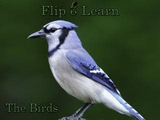 Flip 2 Learn - The Birds