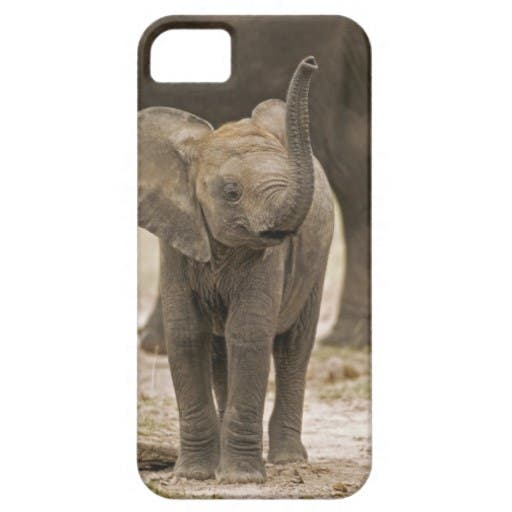 Zazzle's iPhone 5 cases